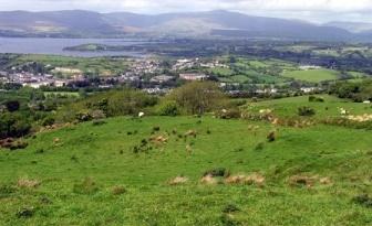 Pasture in Ireland