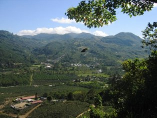 coffee plantation in Orosí Valley, Costa Rica